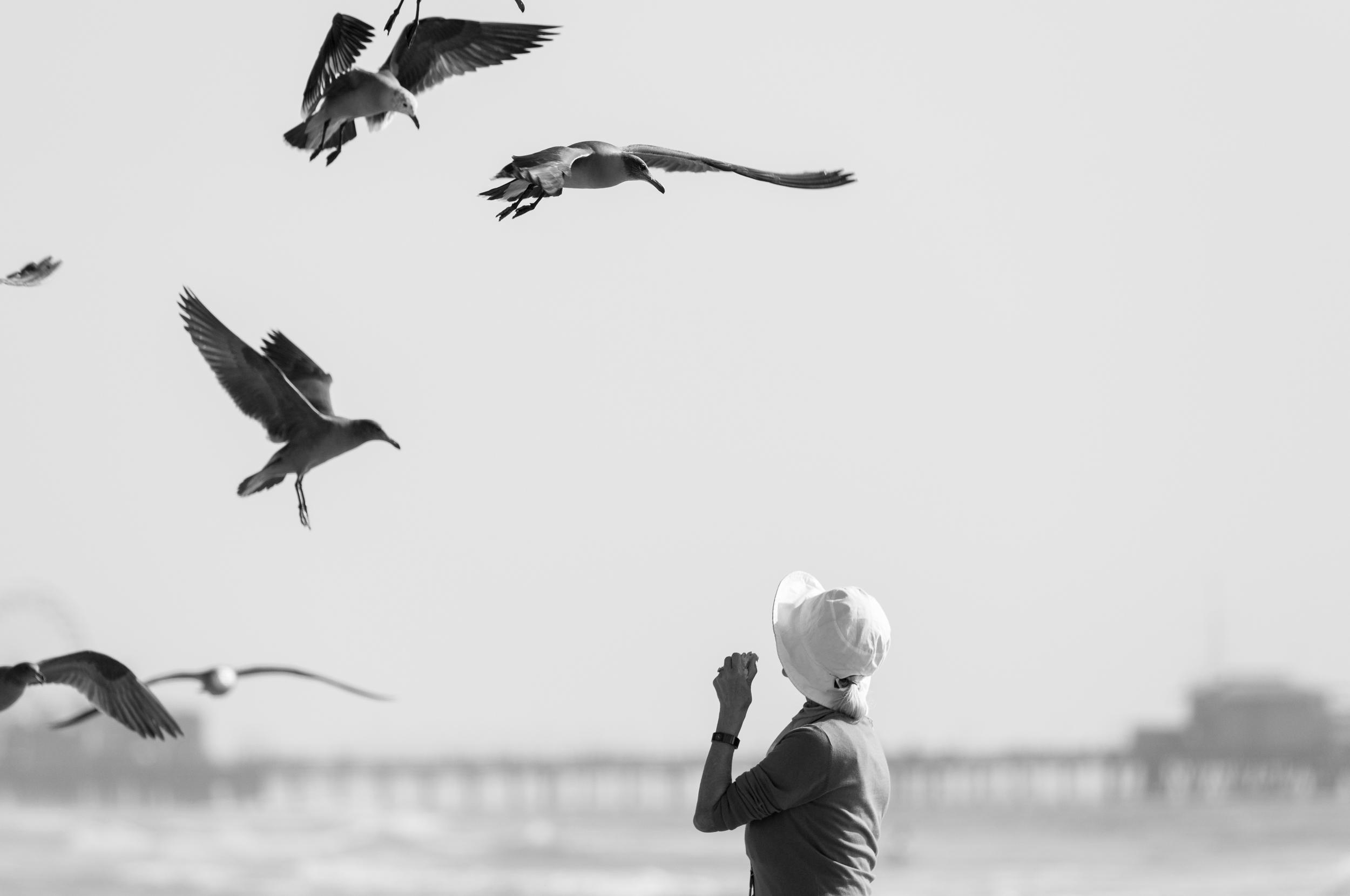 Feeding the seagulls on Santa Monica beach