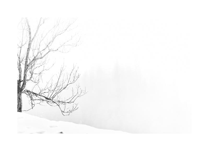 Waiting for spring (1119).jpg