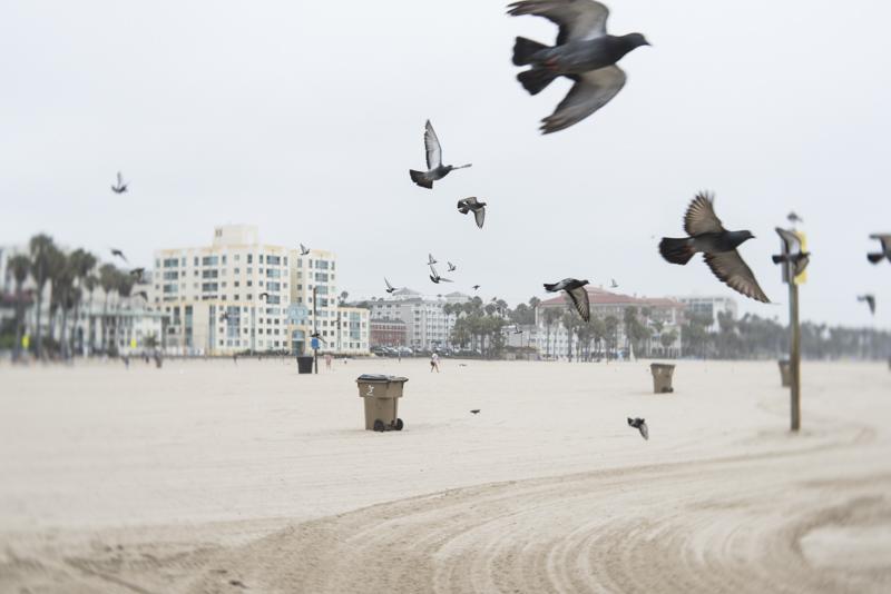 Santa Monica beach by Amy Kanka Valadarsky
