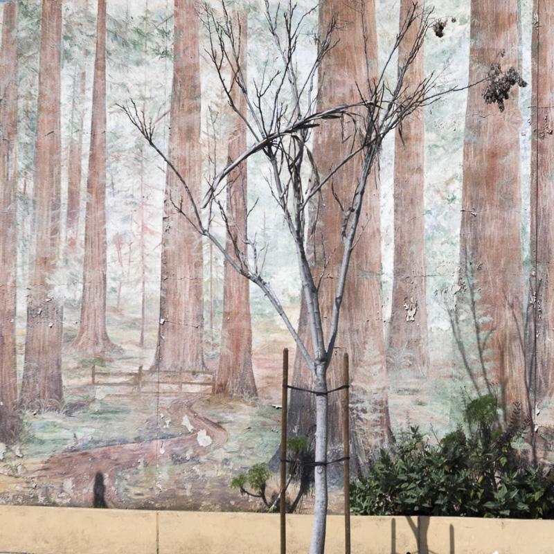 Urban nature by Amy Kanka Valadarsky