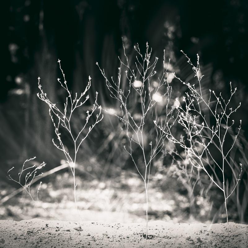 Misthaven #25 by Amy Kanka Valadarsky