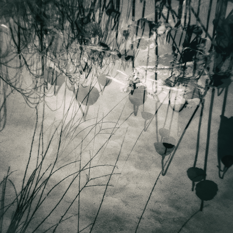 Misthaven #26