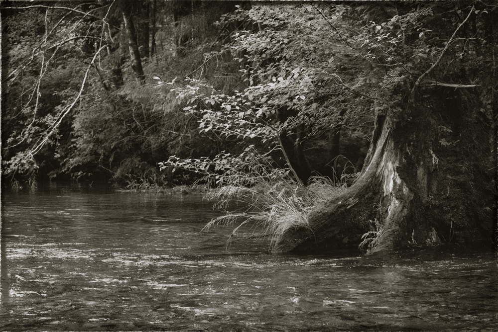 Where the forest meets the stream