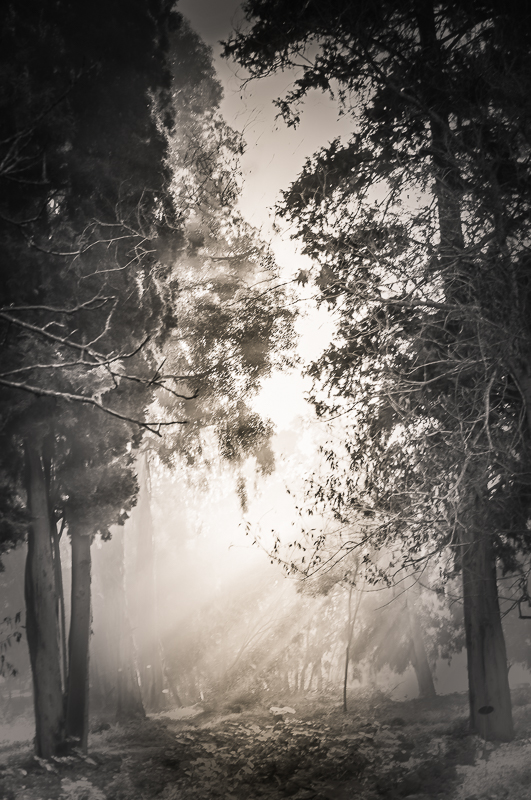 Among the trees #2