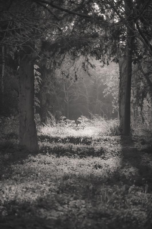 Among the trees #1