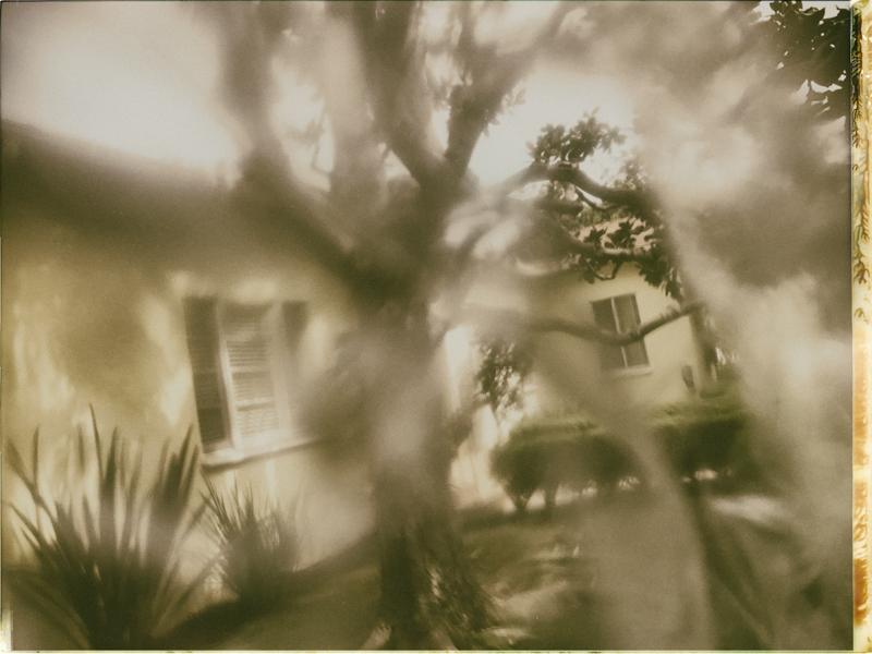 Future memories and a magnolia tree