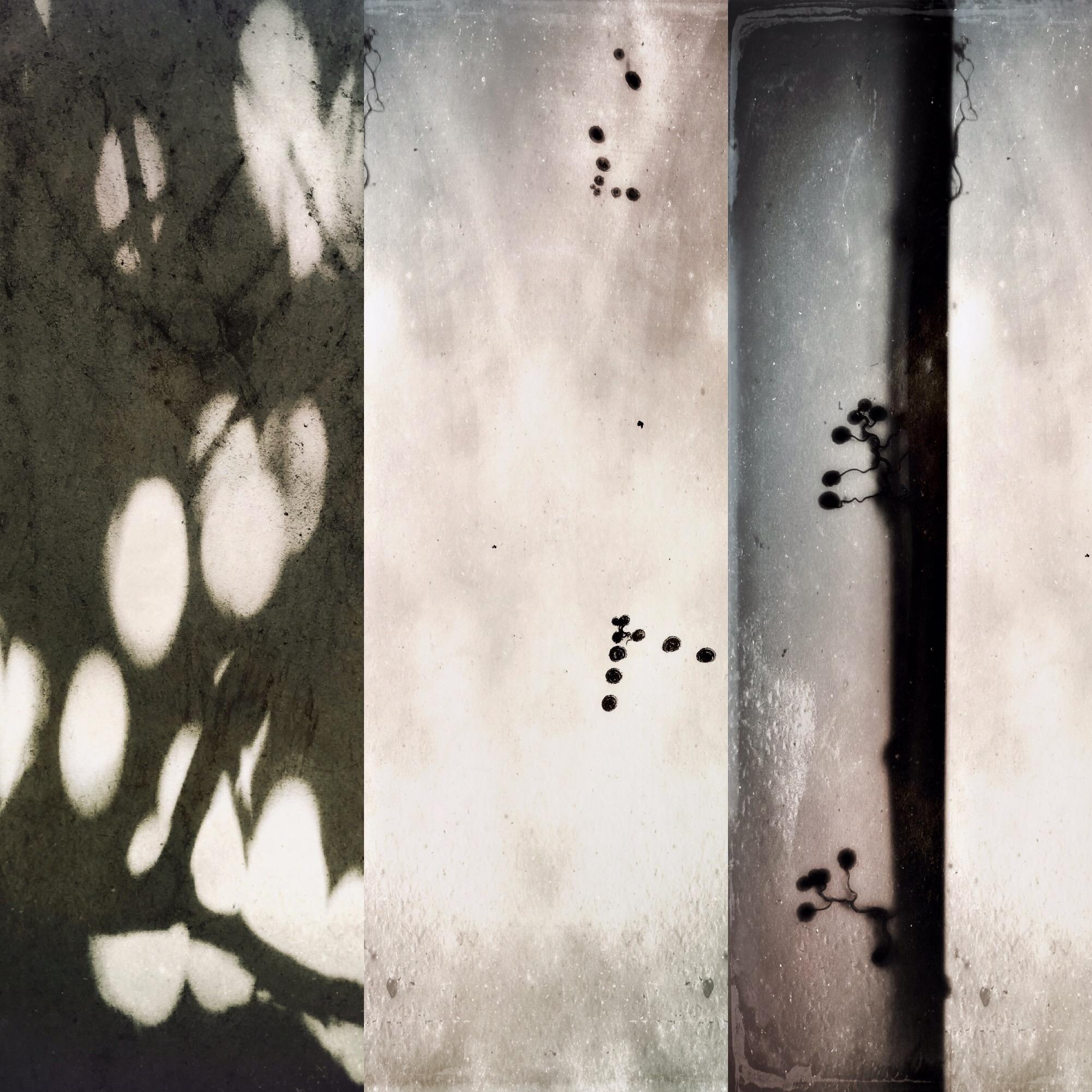amy kanka collage