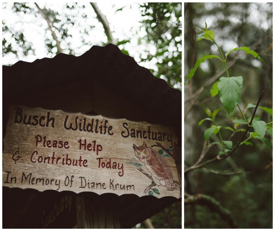 Busch Wildlife Sanctuary Jupiter, Florida