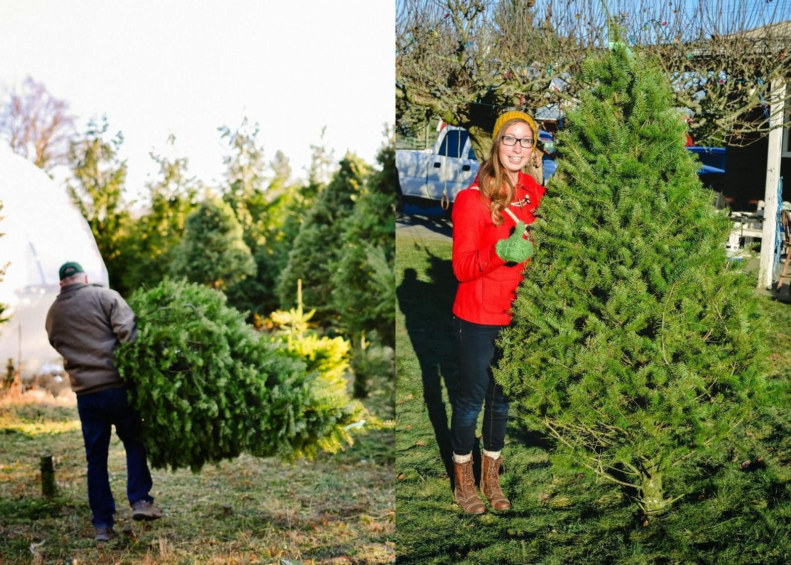 christmas+tree-003.jpg
