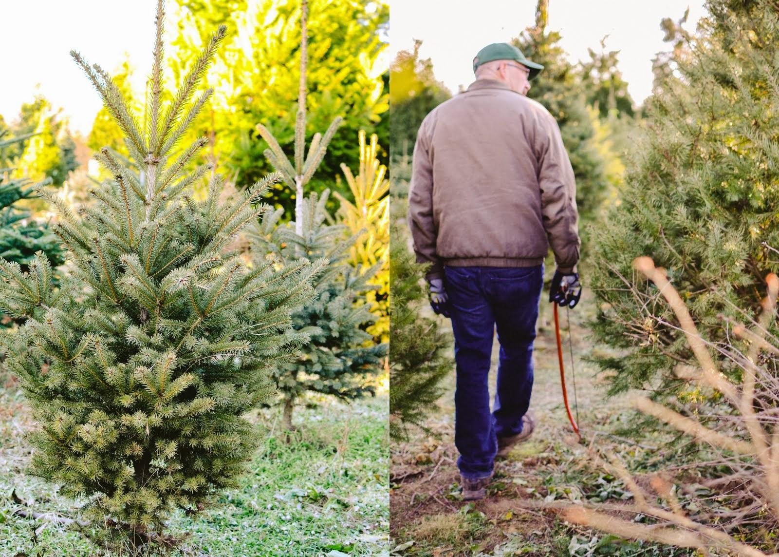 christmas+tree-004.jpg