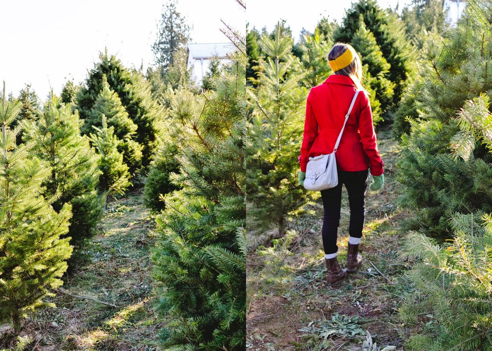 christmas+tree-001.jpg
