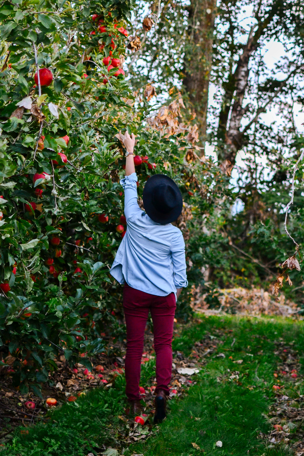Apple and pumpkin picking at Willow view farms - photos by me.