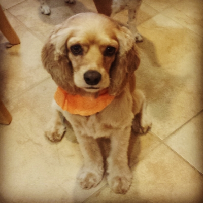Macie after the groomers