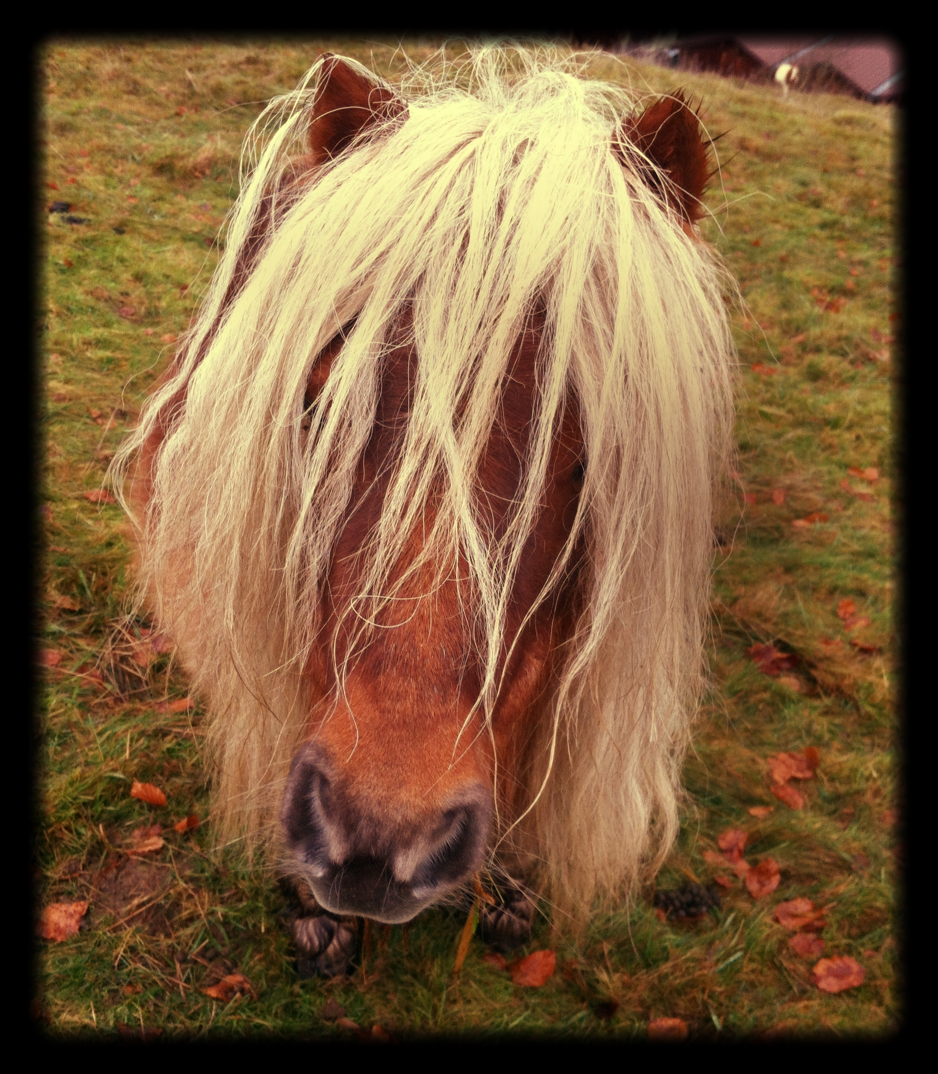 At_least_this_little_pony_can_still_graze
