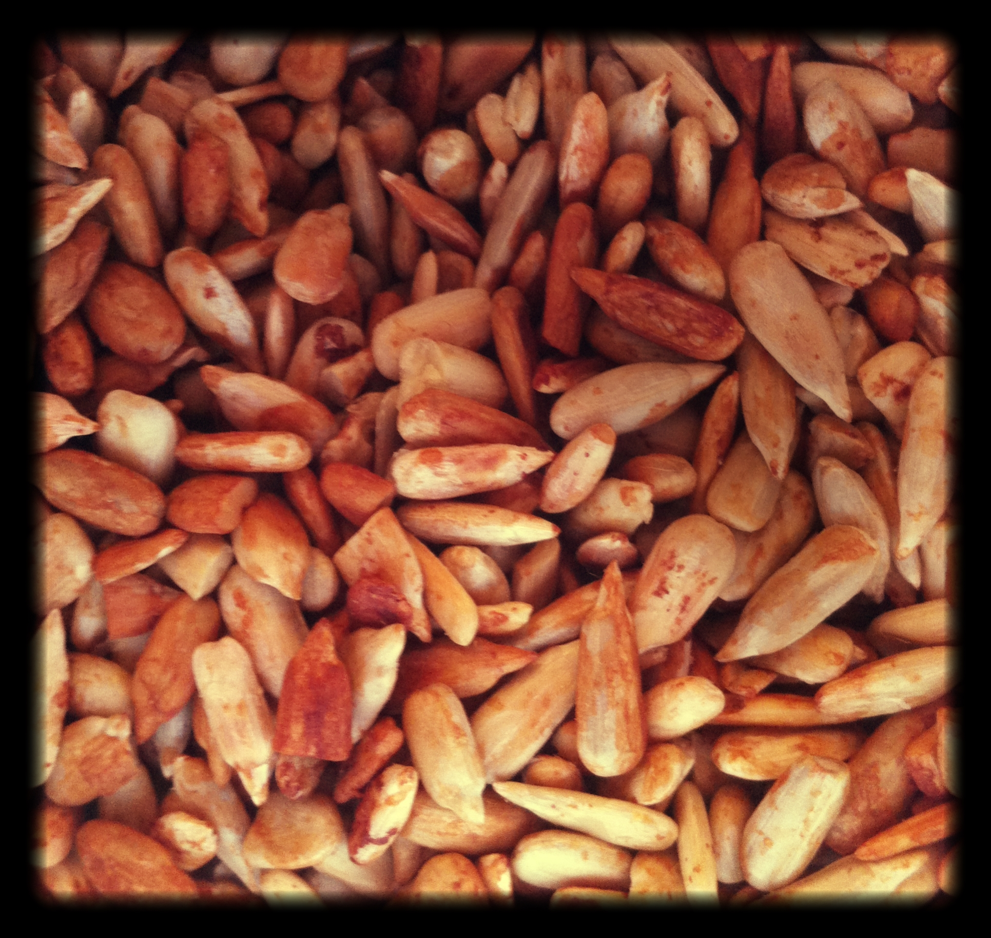 Golden_Roasted_Sunflower_Seeds