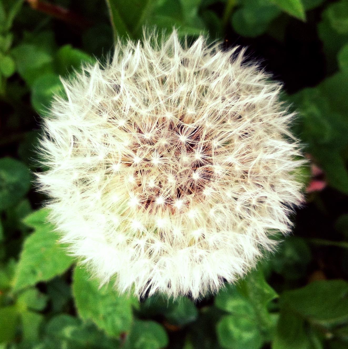 One_Spring_Wish