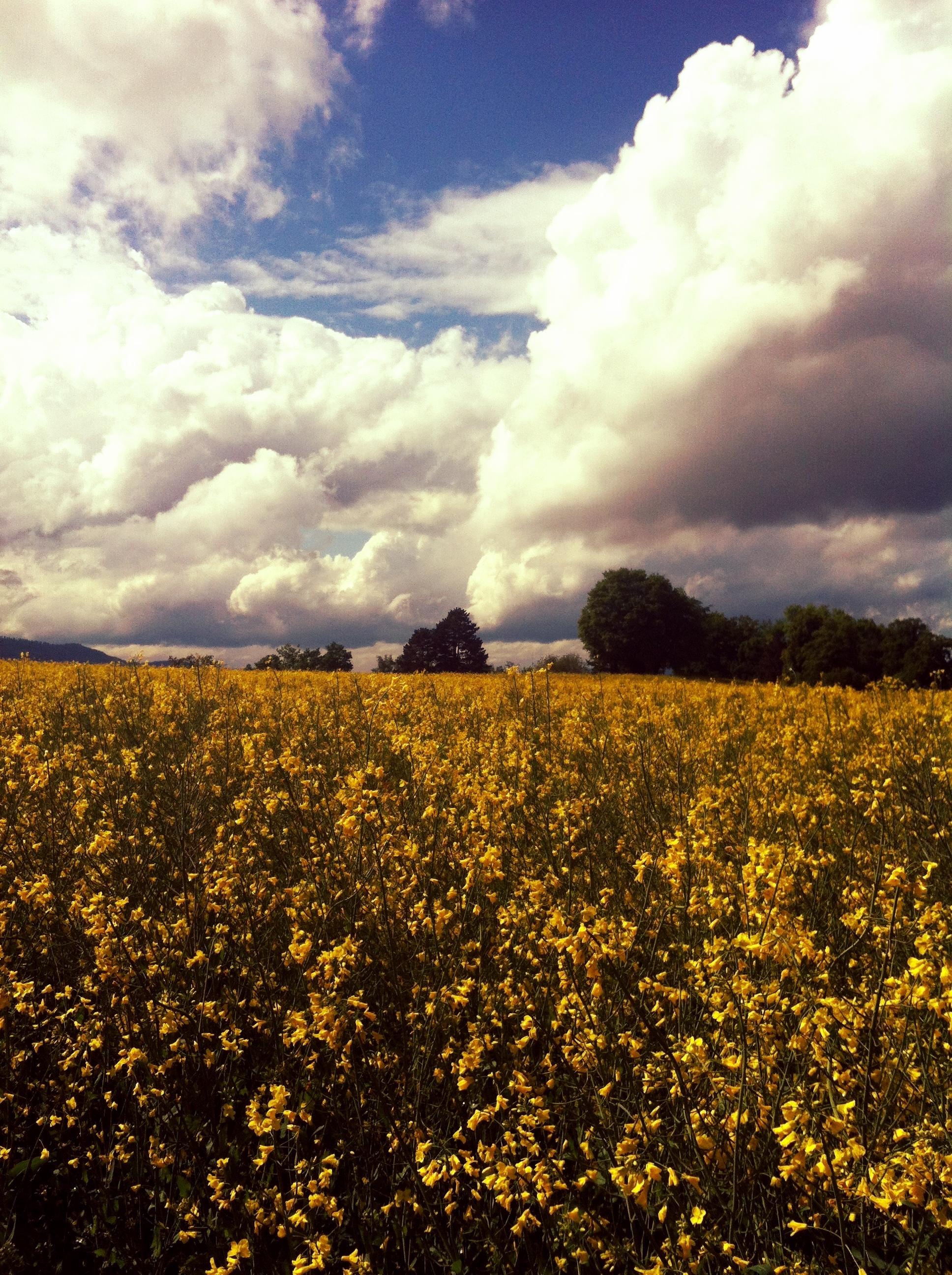 Spring_field_of_flowers