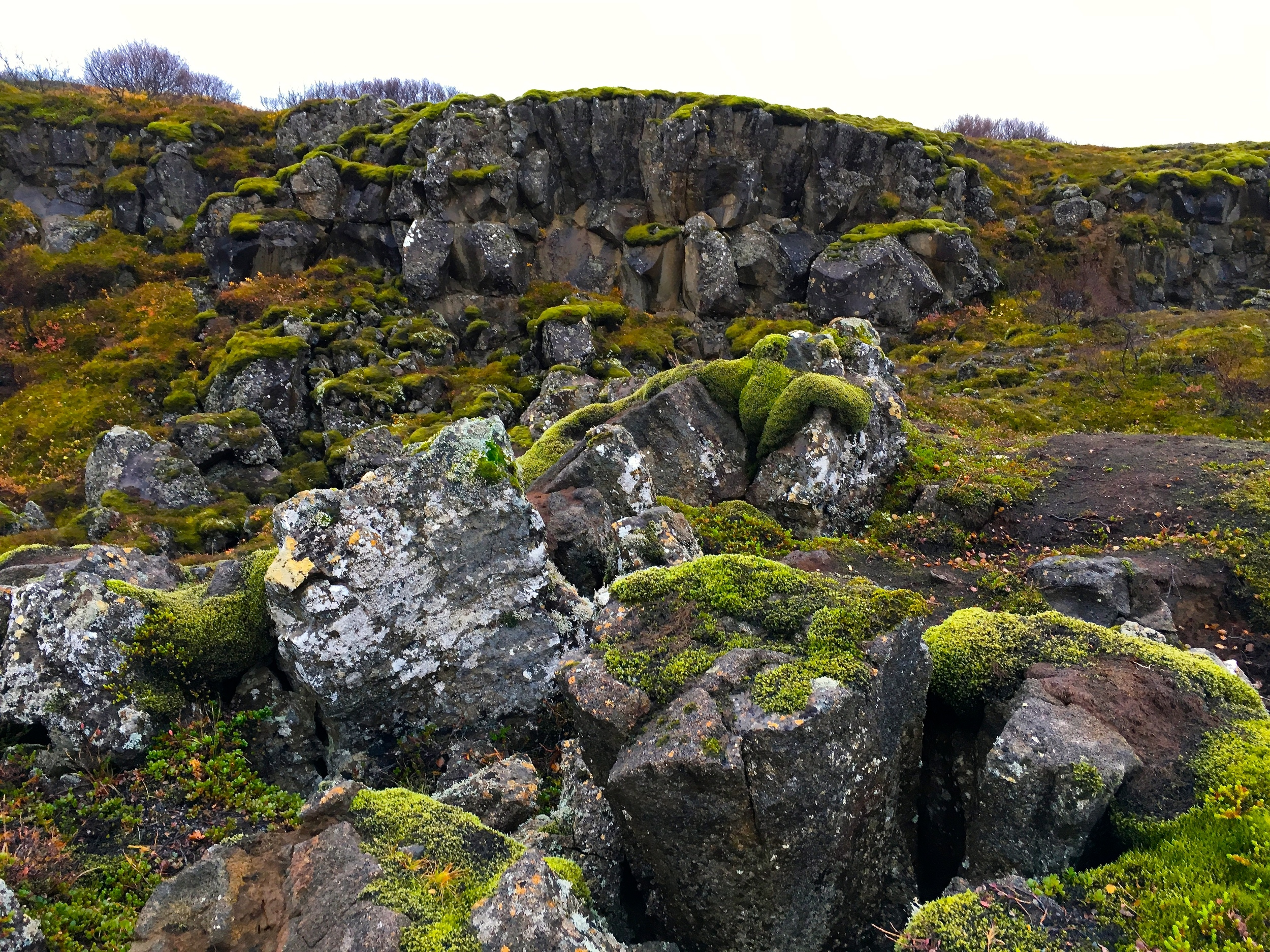 This is what the ground looks like throughout a lot of the countryside- the green moss is springy!