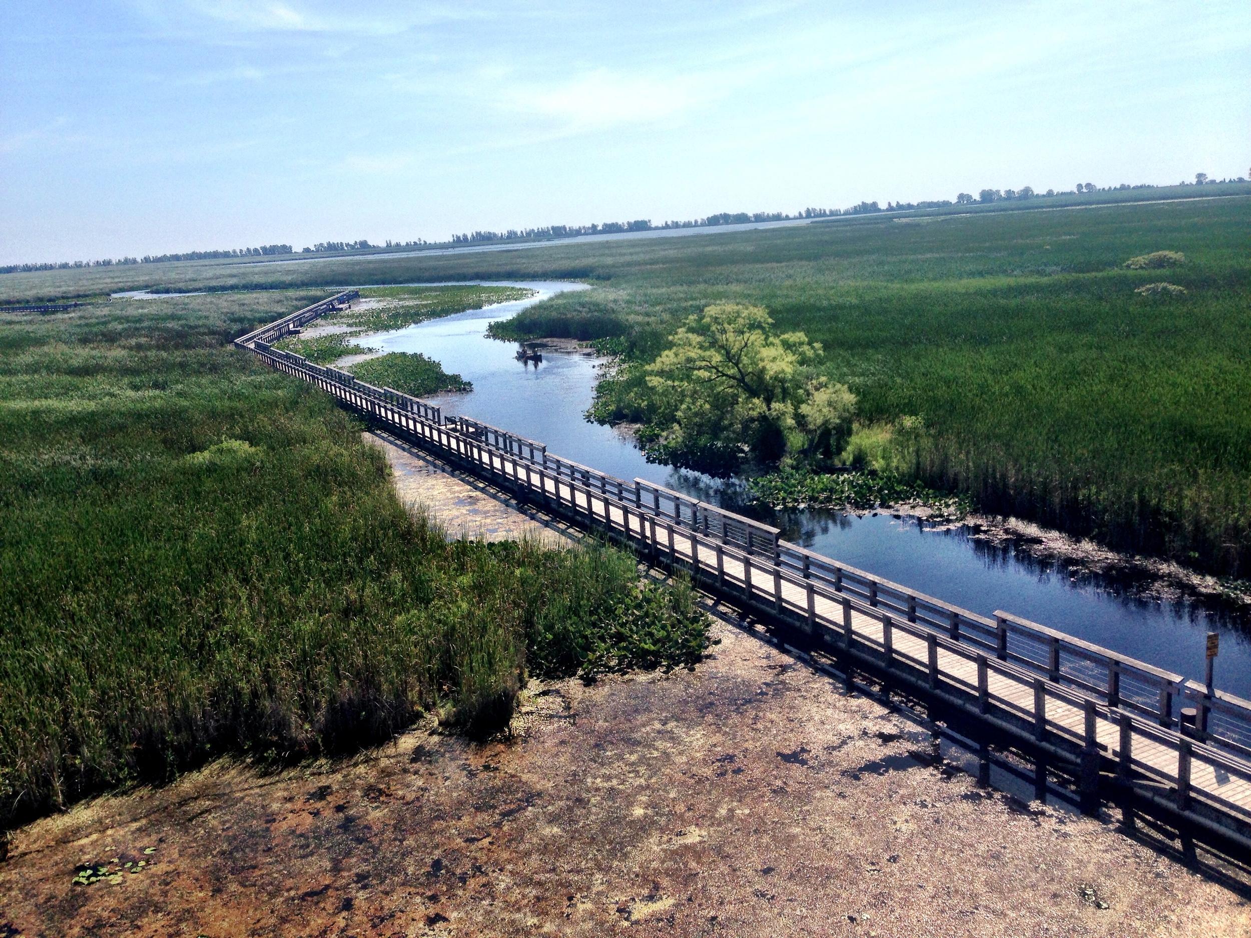 Don't miss the walk through the marsh