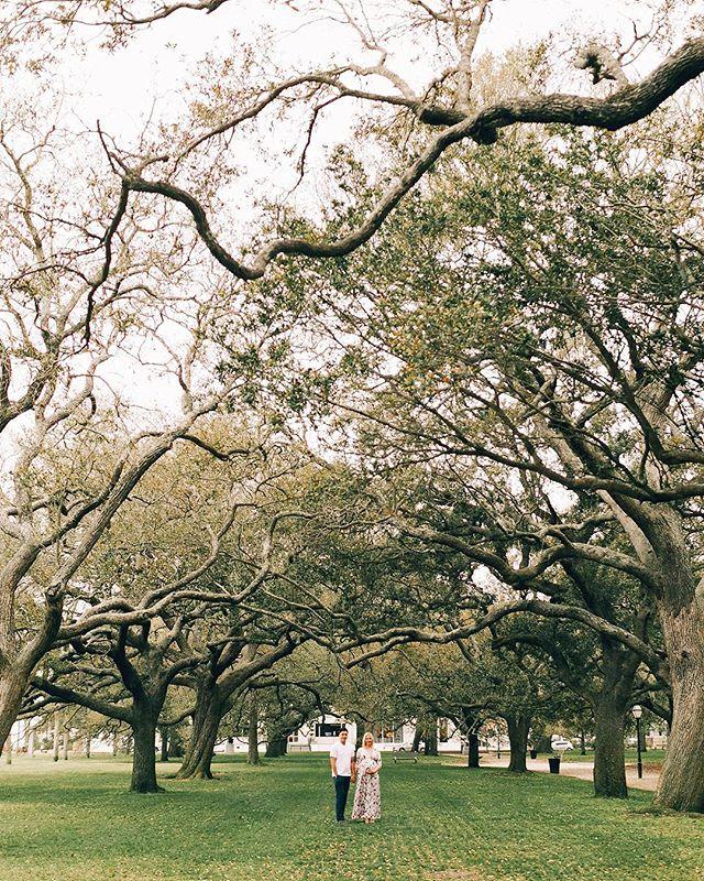 Those trees 😍 #southcarolina #charleston #maternityshoot @photographyanthology