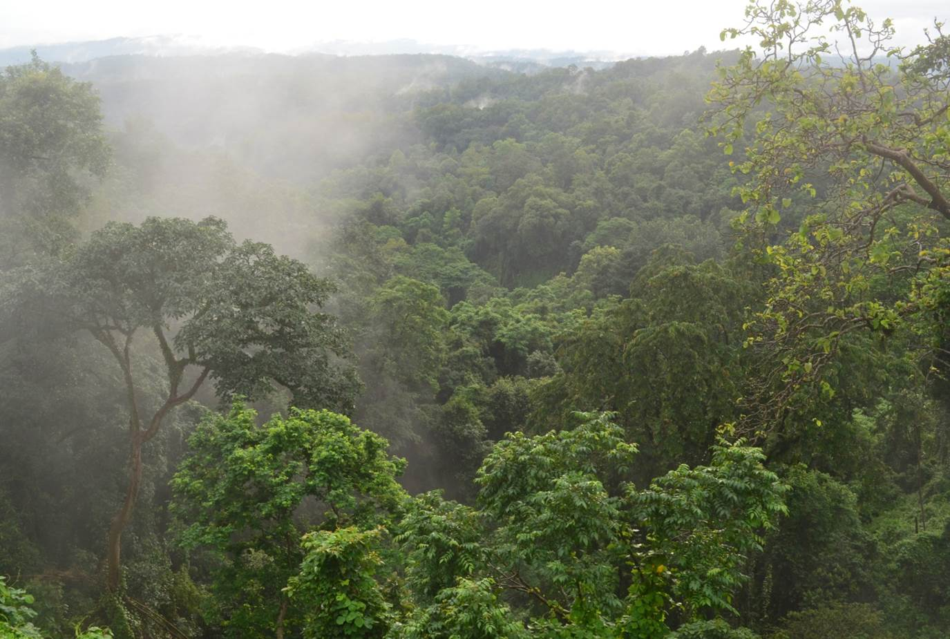 Garo Hills, Meghalaya, India: Primary Forest Valley