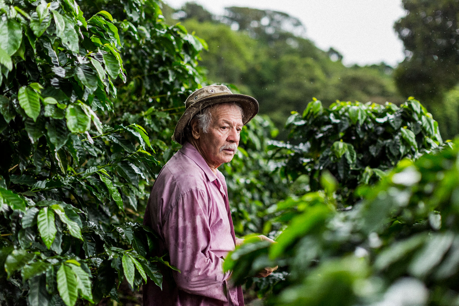 Coffee growers in Monteverde