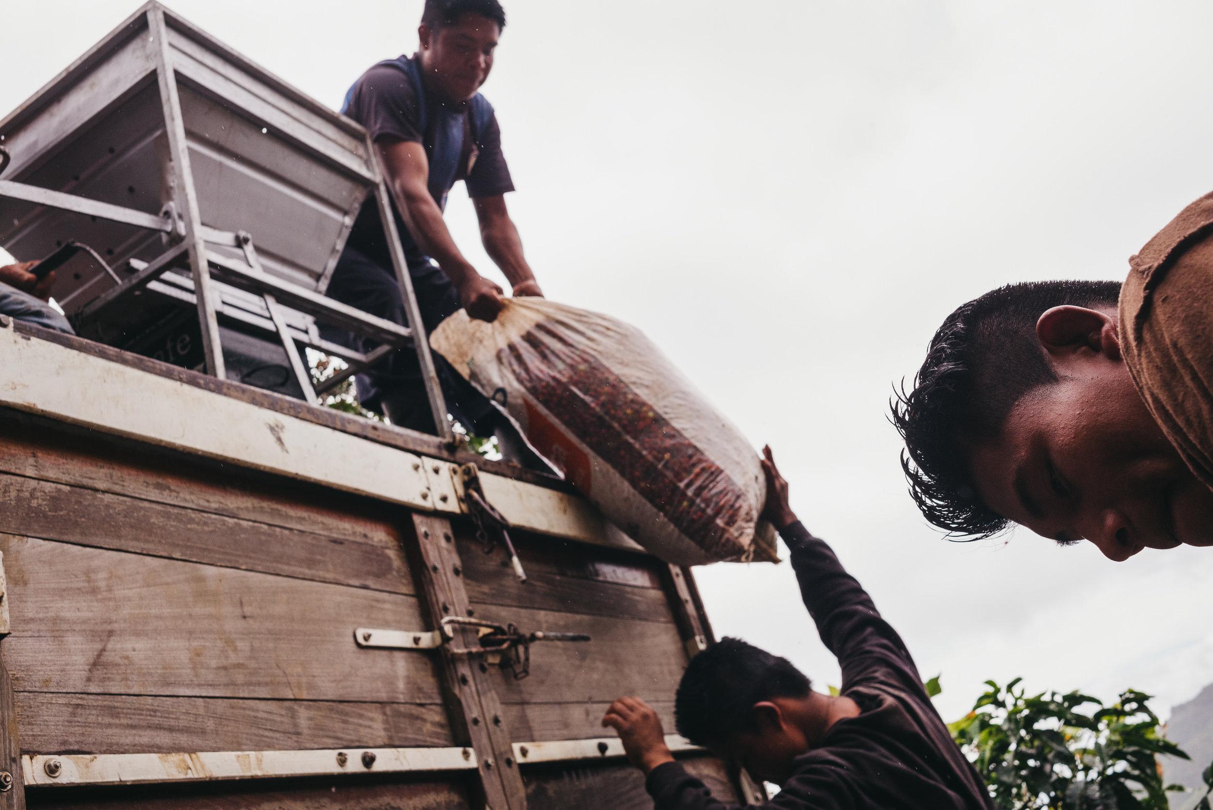 coffee pickers costa rica