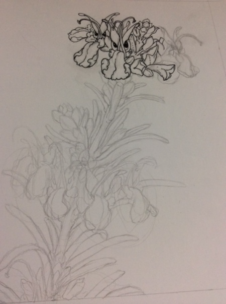 Line sketch and the beginnings with some ink. The image was inspired by the small, orchid-like flowers on Rosemary plants.