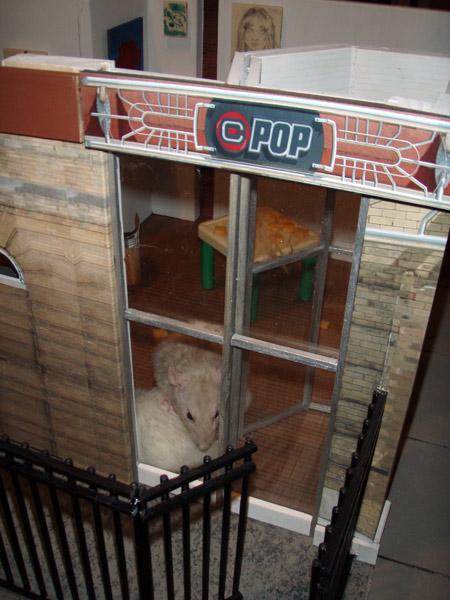 ©POP Gallery already has new occupants.