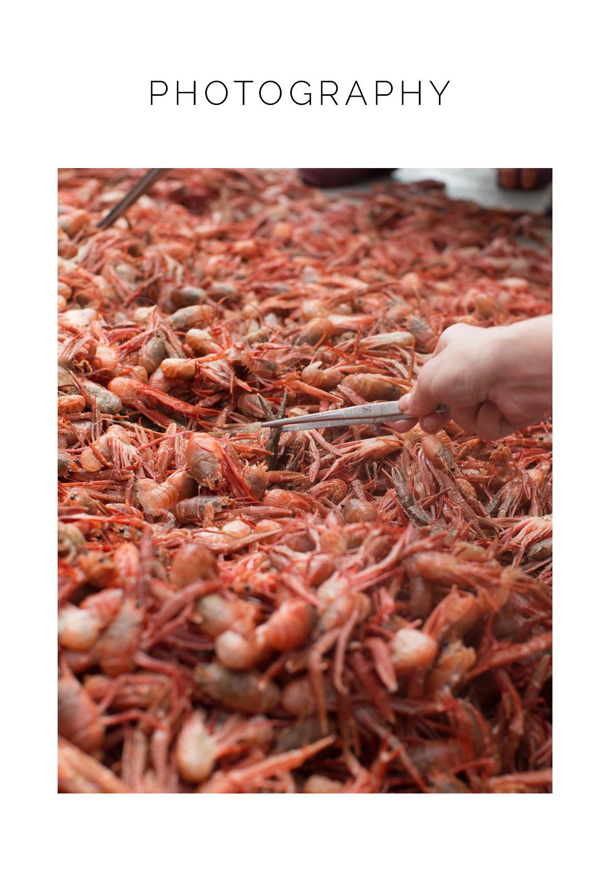 homepagebuttons_crabs.jpg