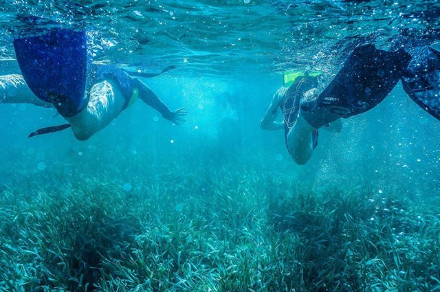 Students snorkel through sea grass in the Bahamas. Through Shedd Aquarium's Teen Science Expedition, students learn first hand how to be marine biologist! They live on Shedd's research vessel, conduct scientific experiments, and learn methods in the field to gain a better understanding of coral reef ecosystems.⠀ .⠀ .⠀ .⠀ .⠀ #hsmb #highschoolmarinebiology #sheddaquarium #sheddthestraw #science #marinebiology #marinebiologystudent  #marinebiologyforlife  #savetheocean #savetheoceans #learning #optoutside  #conservationphotography  #conservationphotographer #conservationphotographers #environmentallearning  #foreveryoung  #environmentaleducator  #hillaryeggersshedd  #tellyourstory #photooftheday