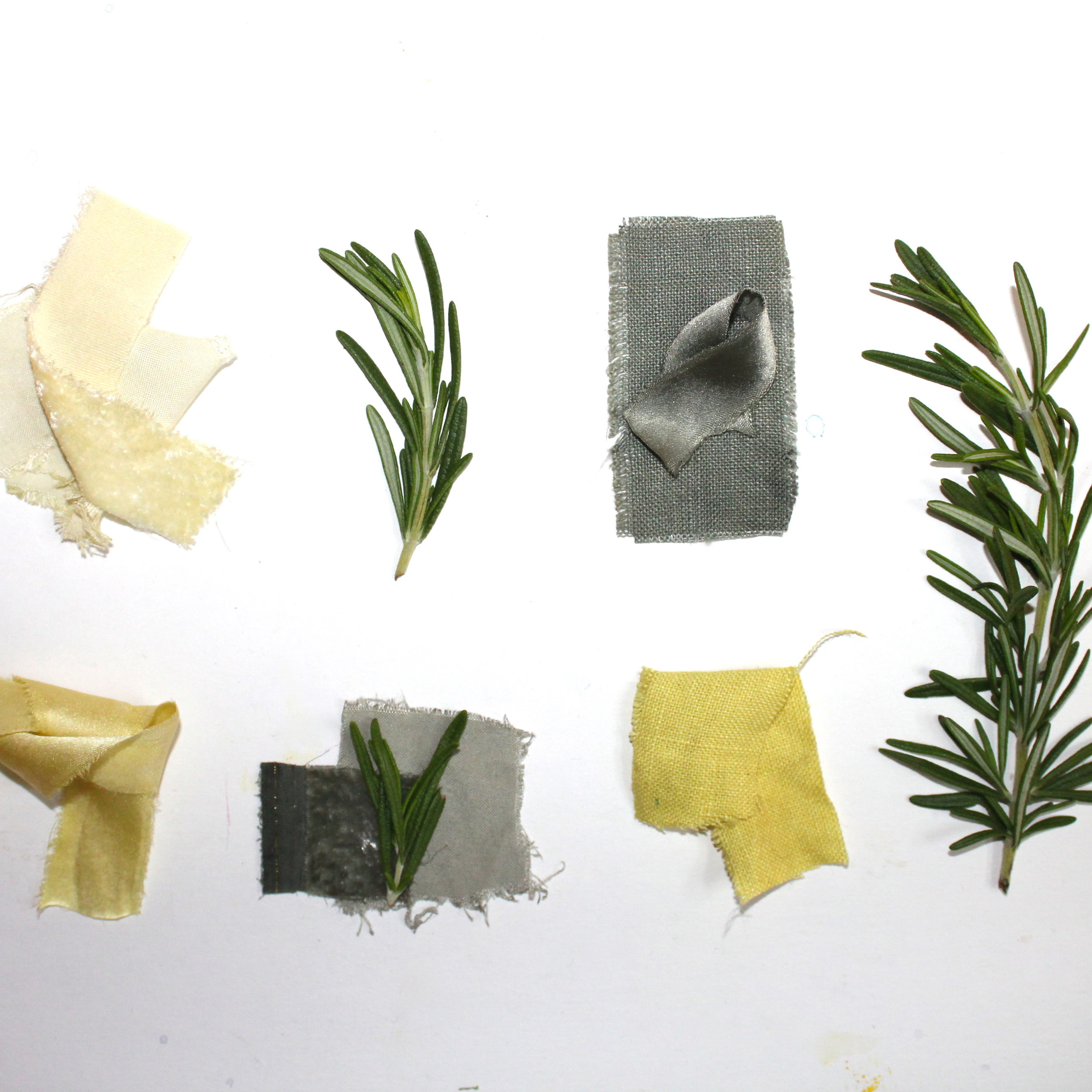 Rosemary  The leaves of the rosemary plant can be used to make a yellow green dye. When iron is added as a modifier, you can achieve a grayish, sage green color.