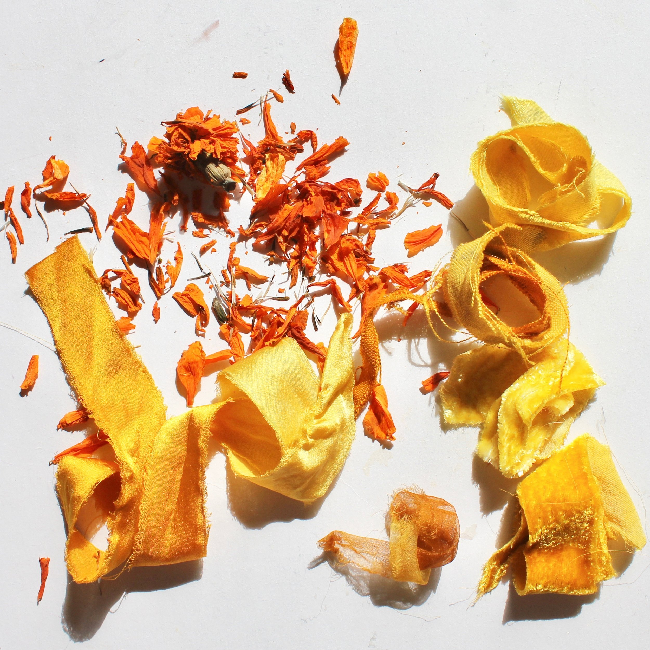 Marigold  The petals of the marigold flower yield a range of sunny colors from butter yellow to deep orange.