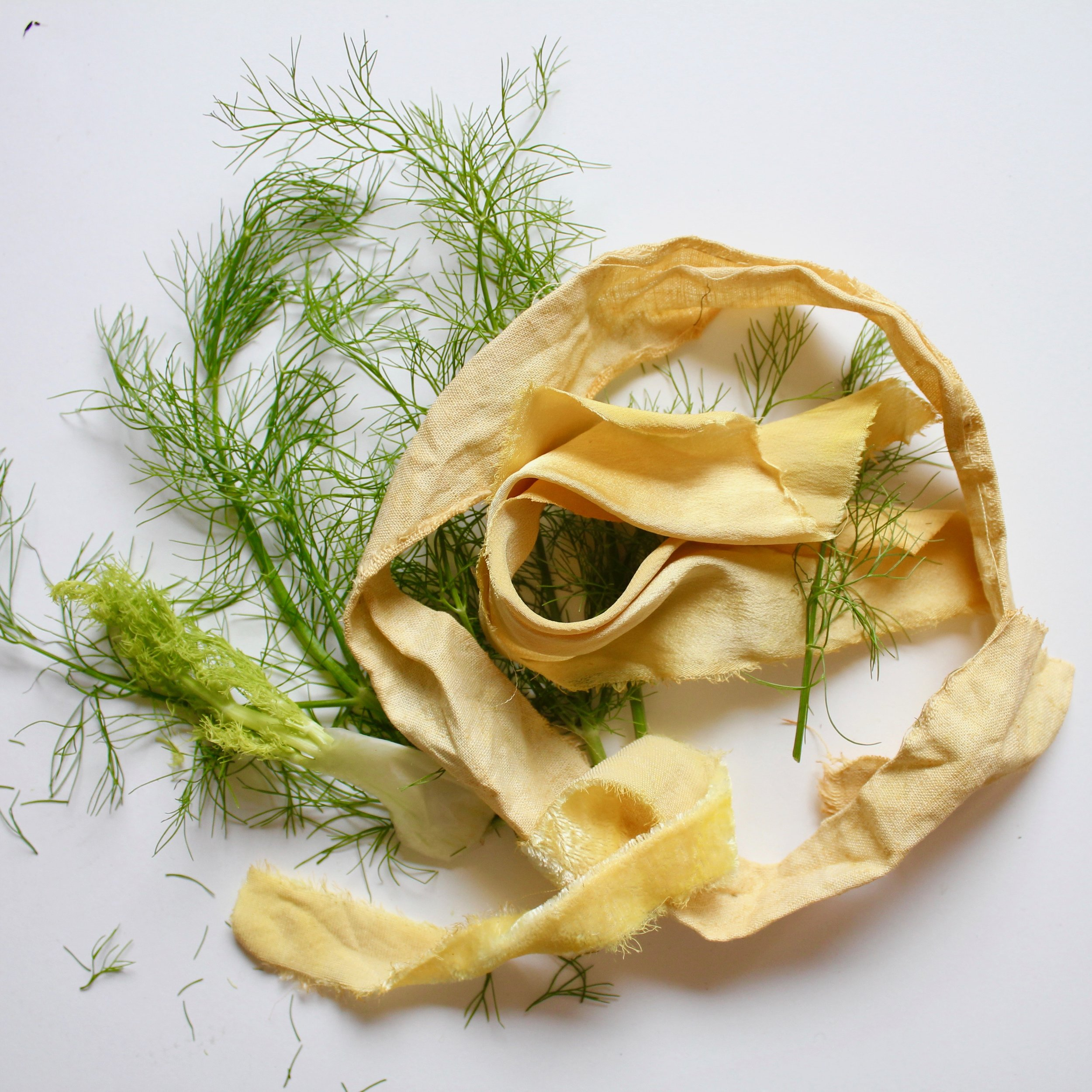 Fennel  Fennel tops can make sunny yellows