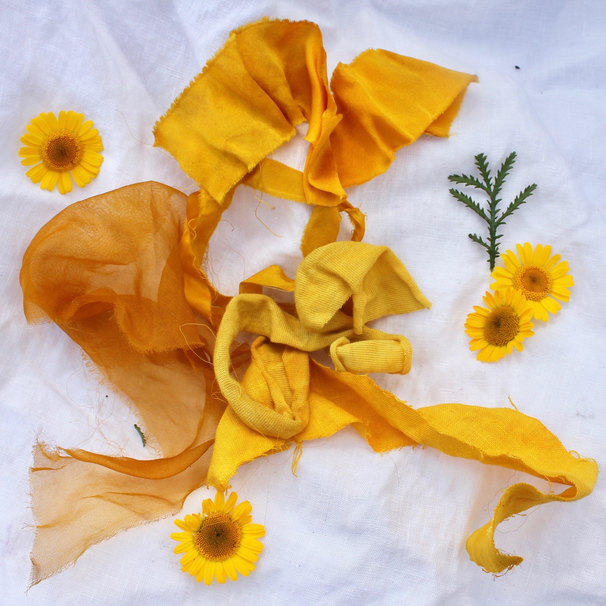 Dyer's Chamomile  This cheery yellow flower creates bright yellows to mustard yellows.