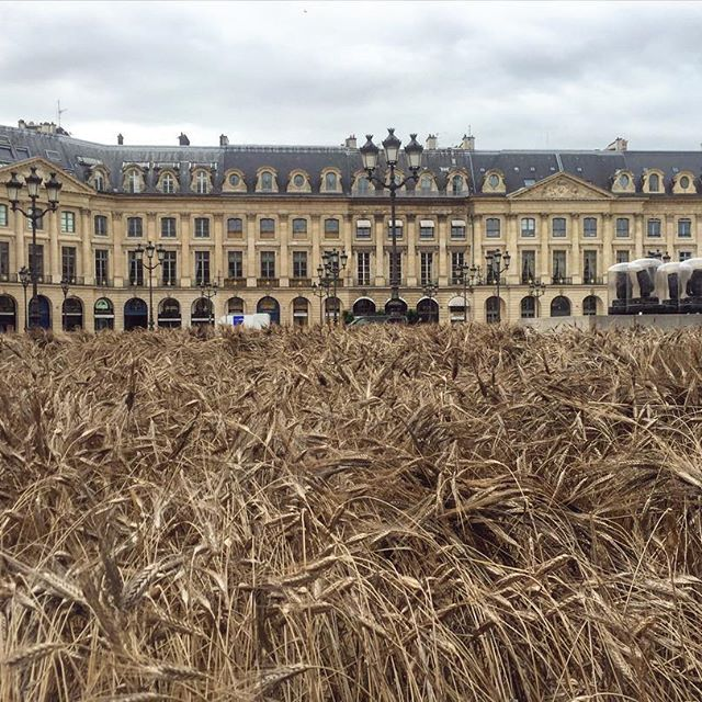 The Place  Vendôme   in Paris, planted with wheat to celebrate the launch of Chanel's new collection, by the artist Gad Weil.
