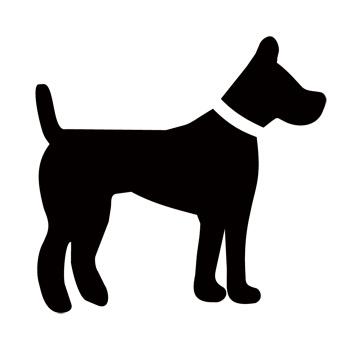 dog - website.jpg