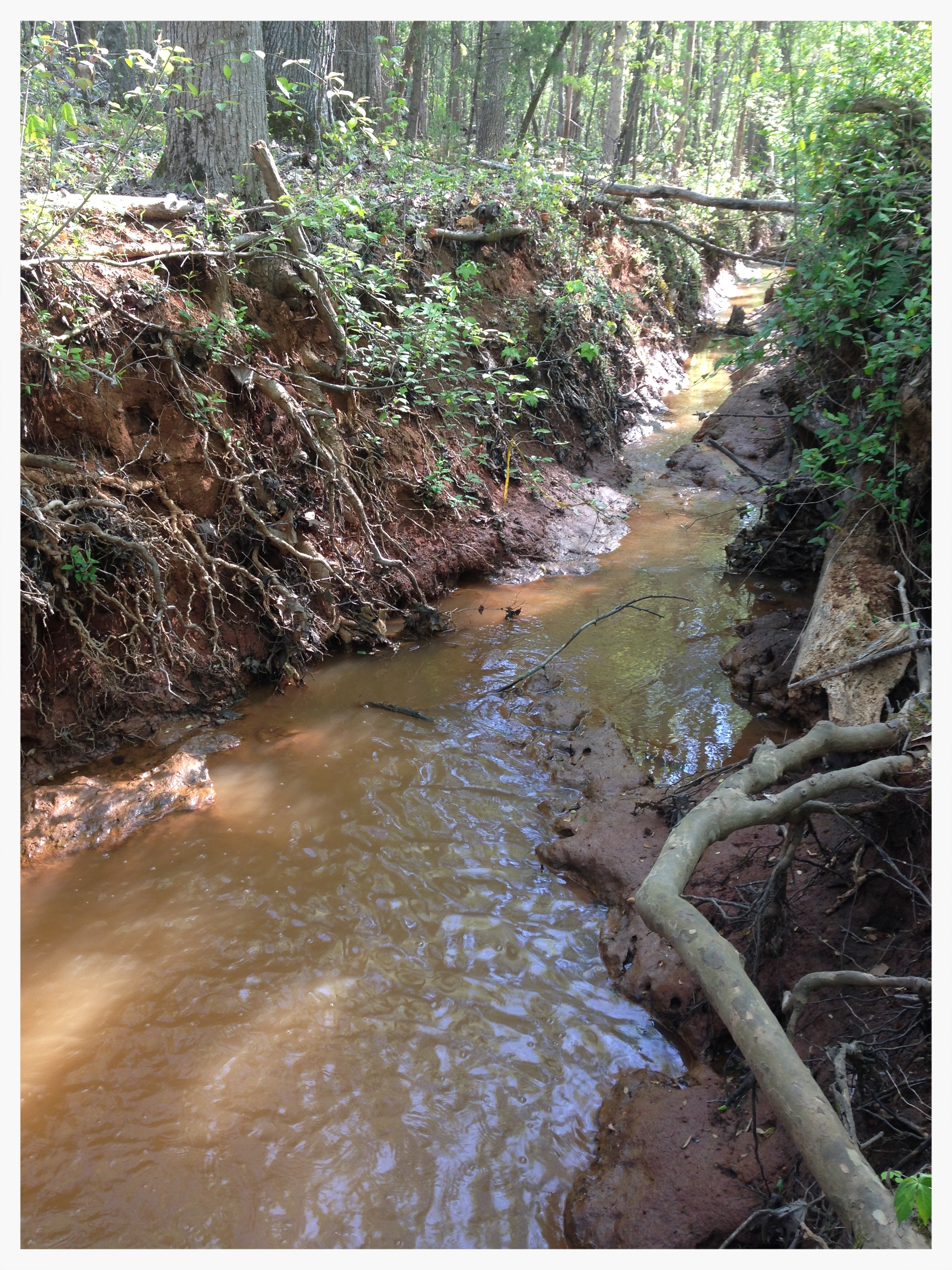 Downstream of head cut, notice the channel incision & eroding banks.