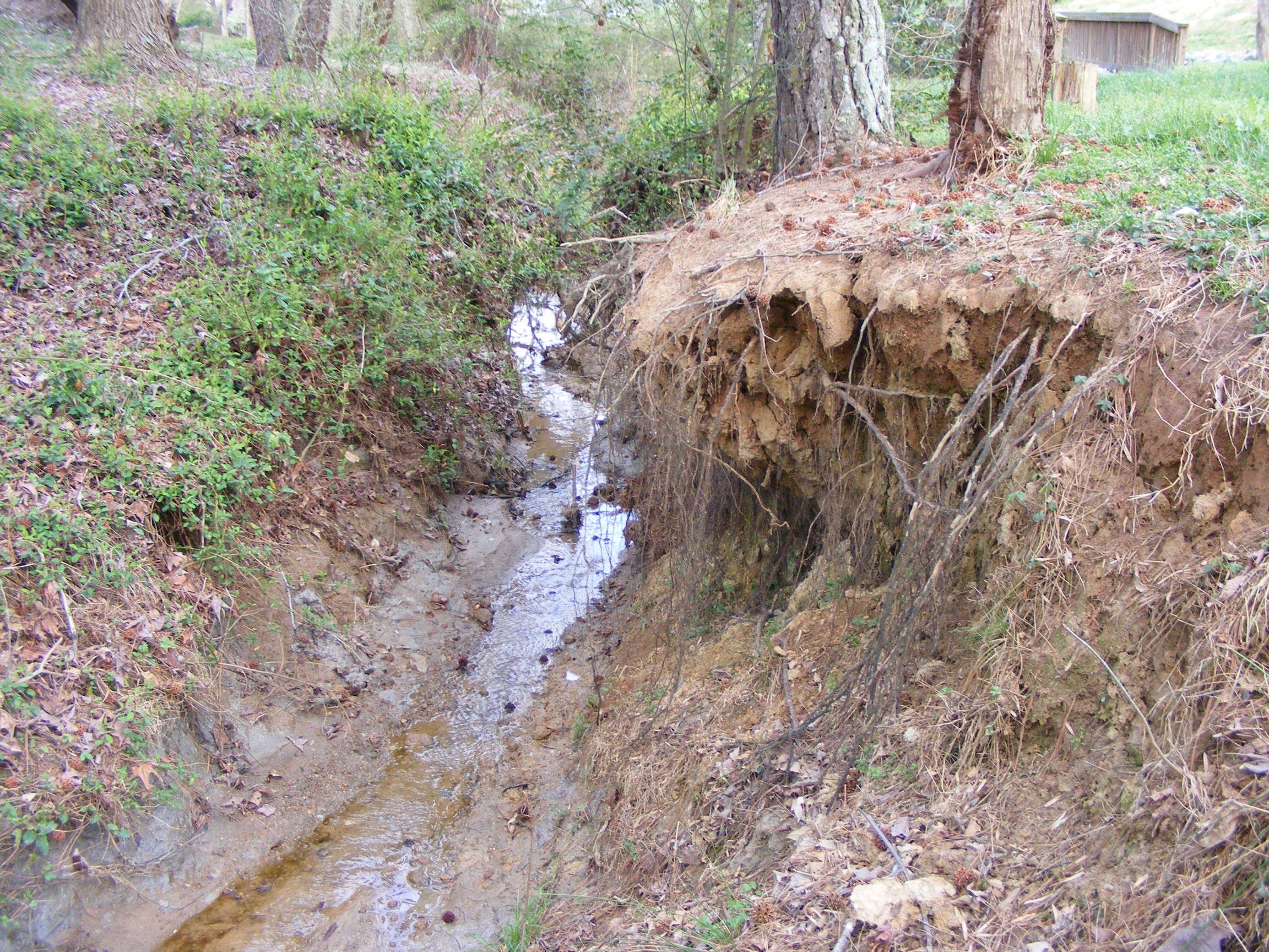 Phase 2 erosion and tree fall.JPG