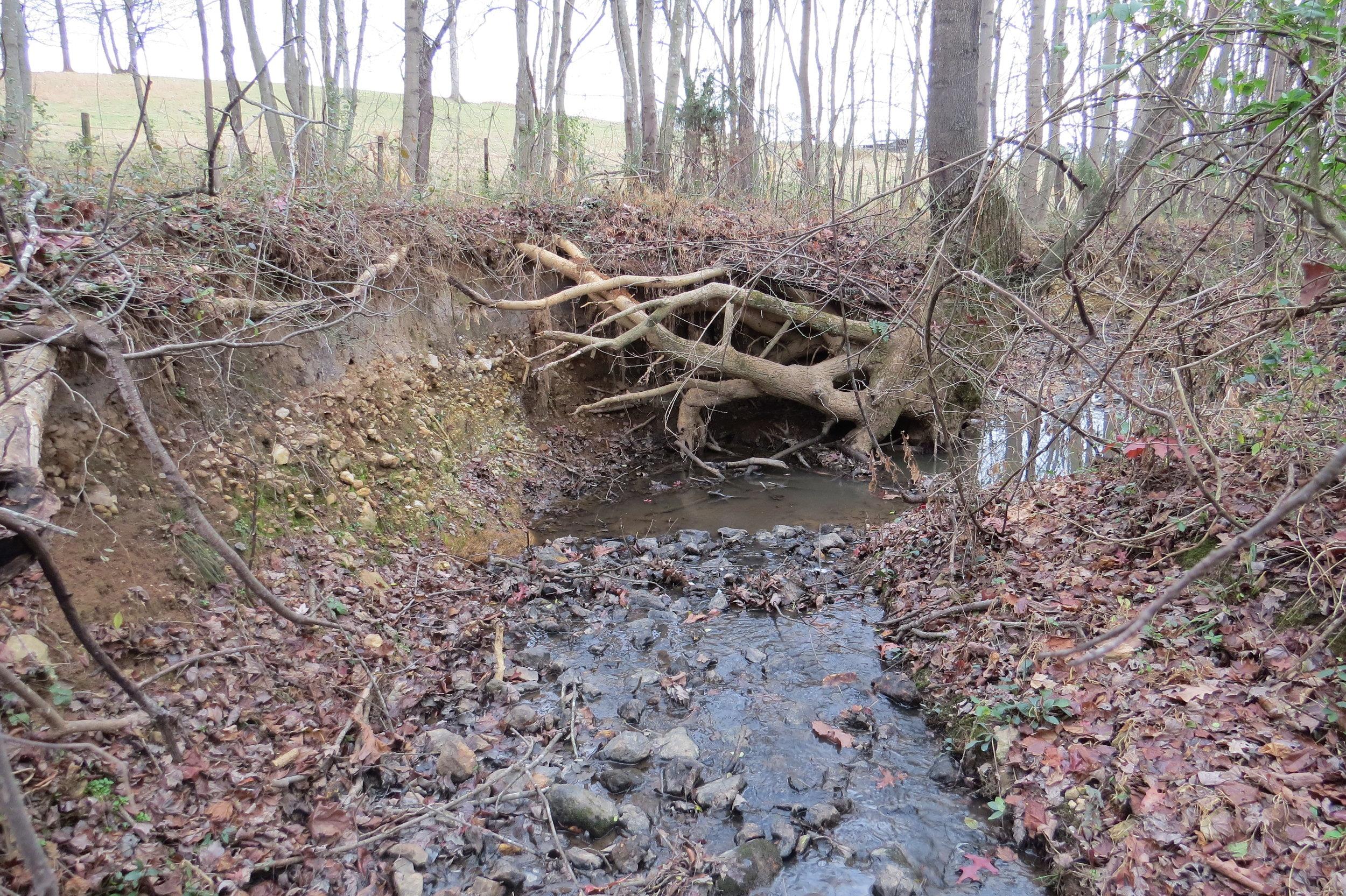 Horne Creek 1.JPG