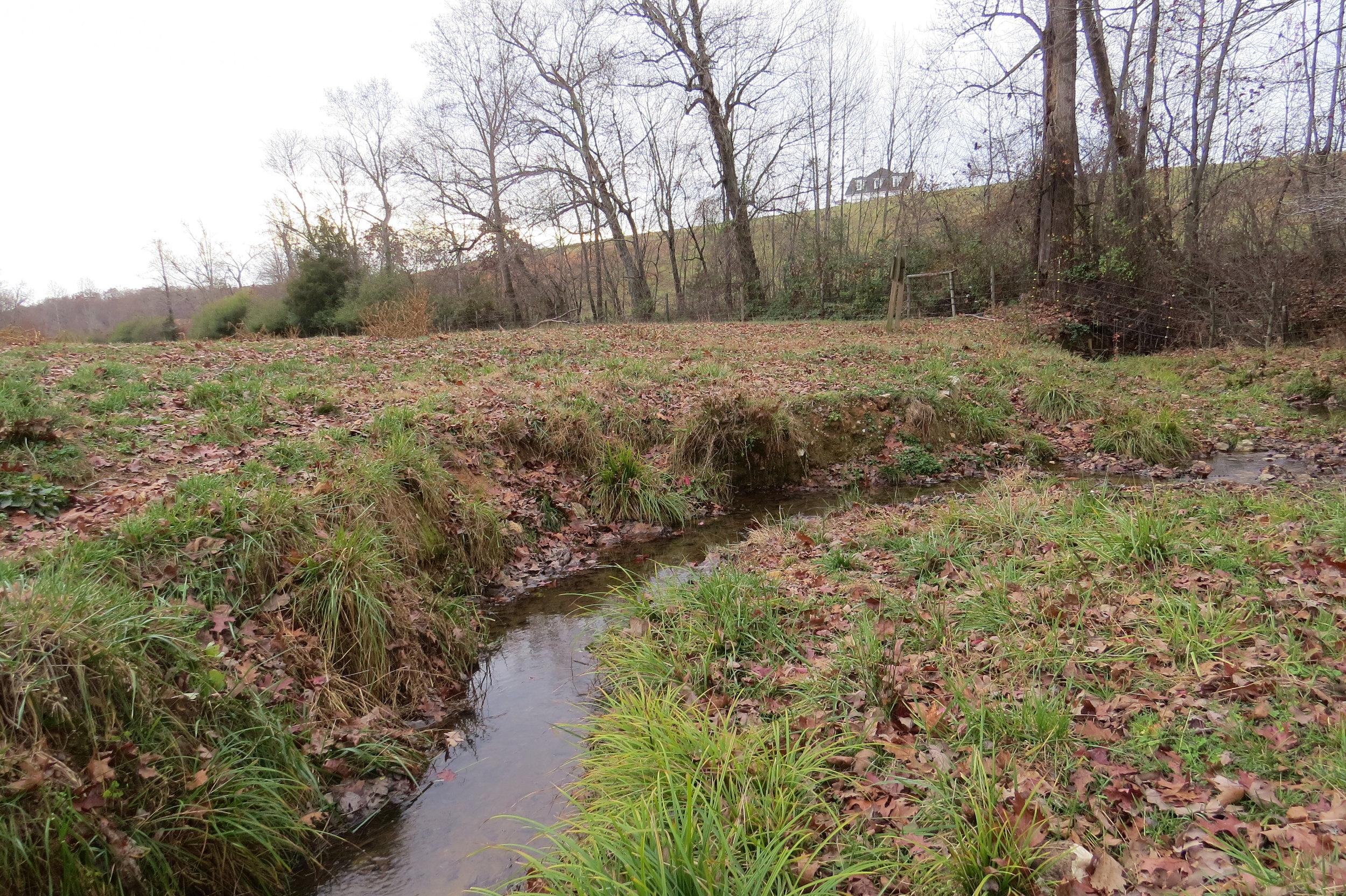 Horne Creek 3.JPG