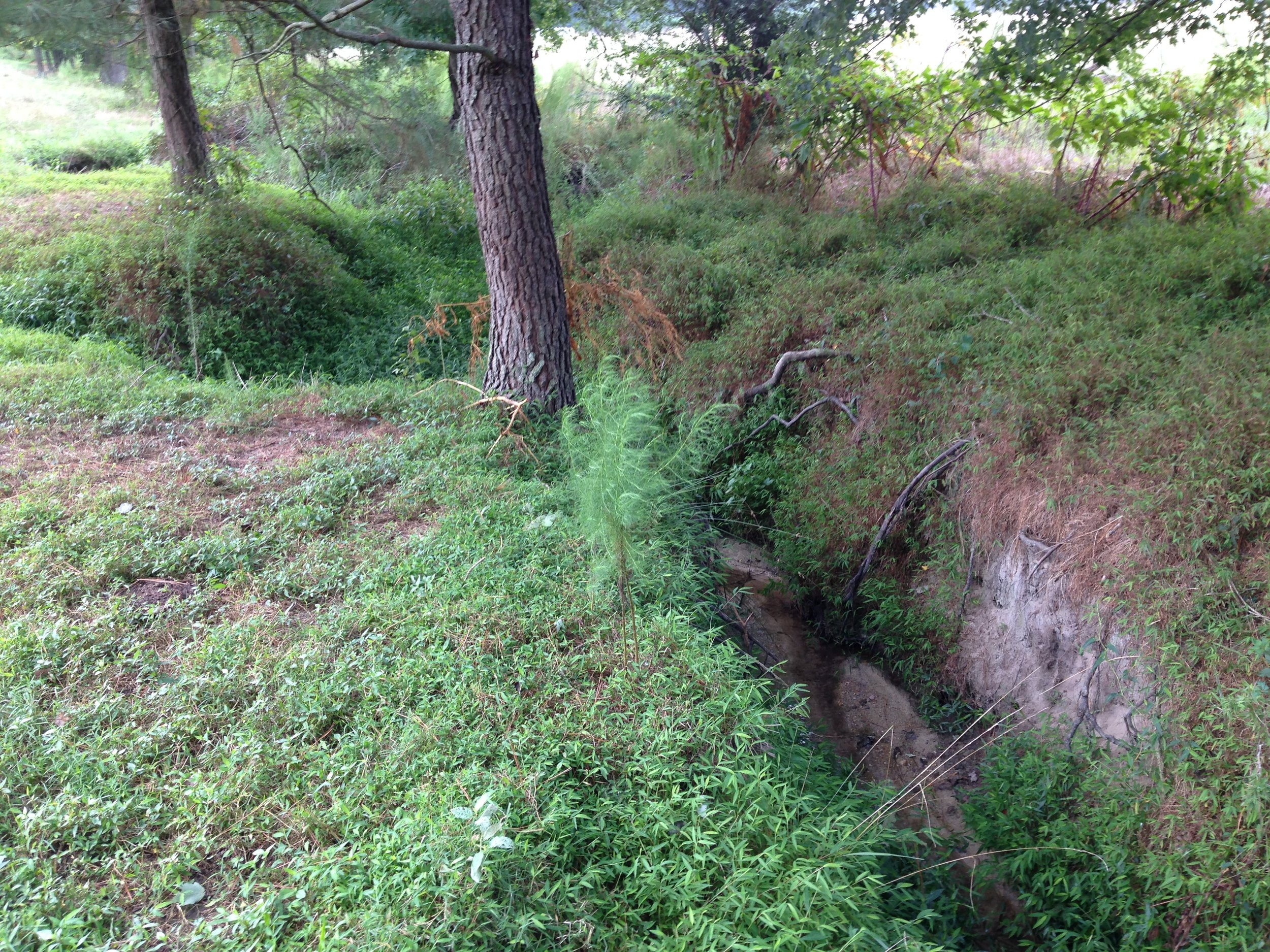 20150821_Lake Wendell Mit Prj_Reach 2 Looking US Entrenched Lower Reach.JPG