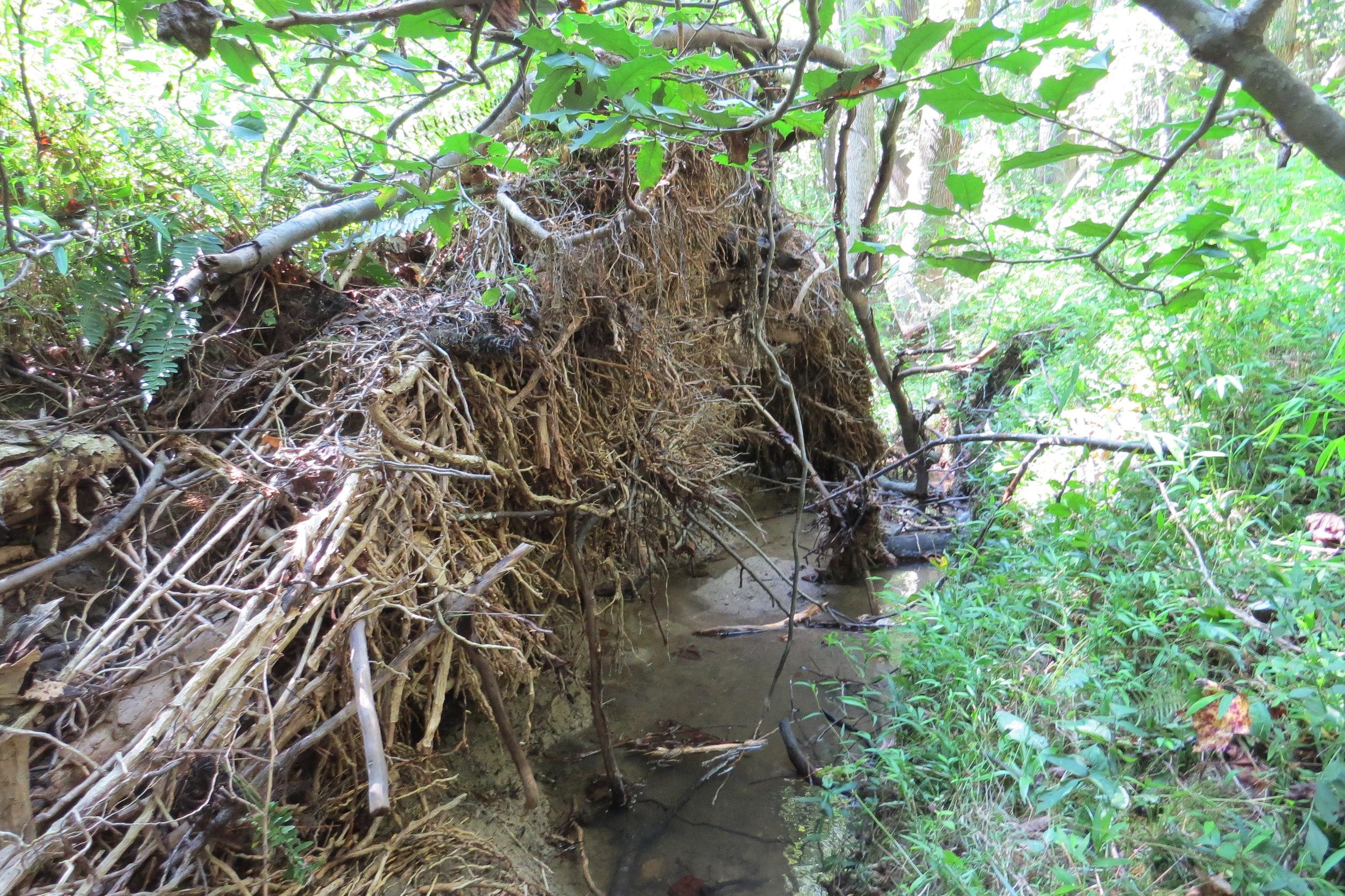 Buffalo Creek 2.jpg