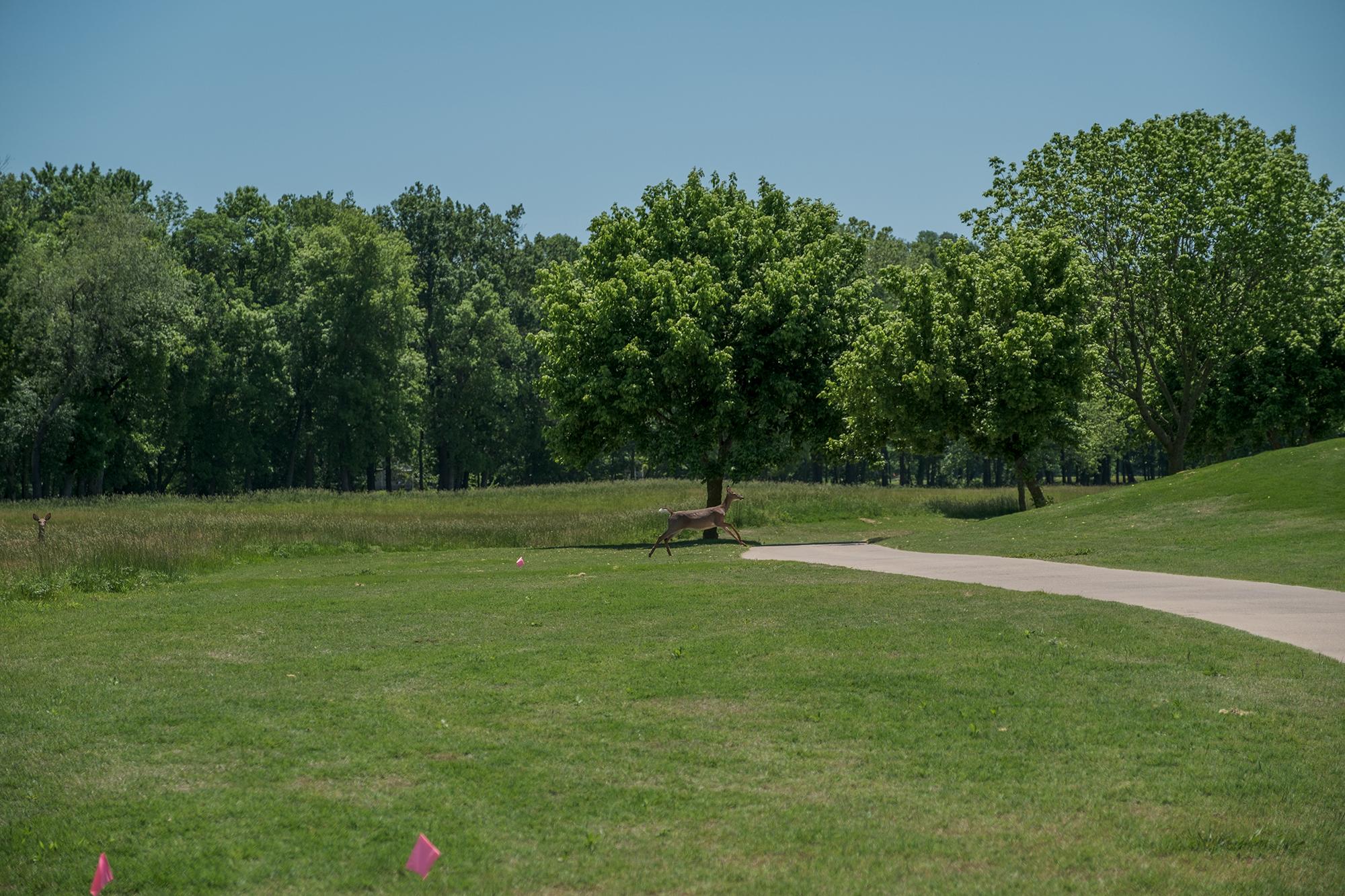 D&F Golf 0479.jpg