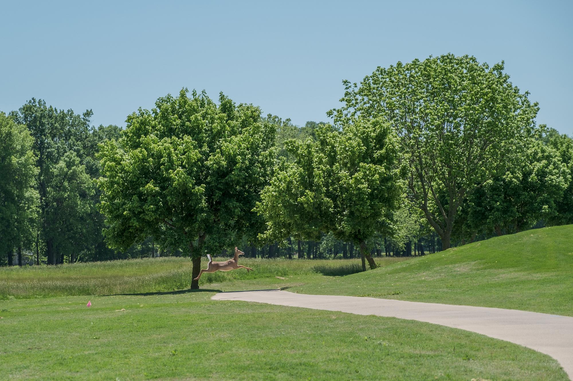 D&F Golf 0480.jpg