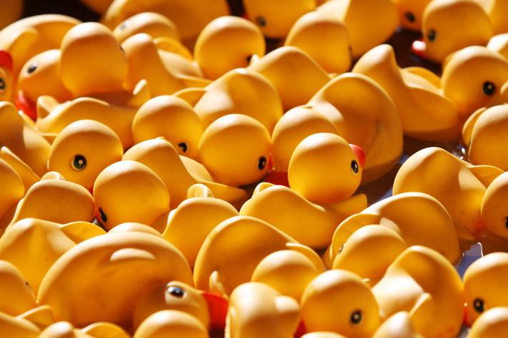 Ducks - Final.jpg