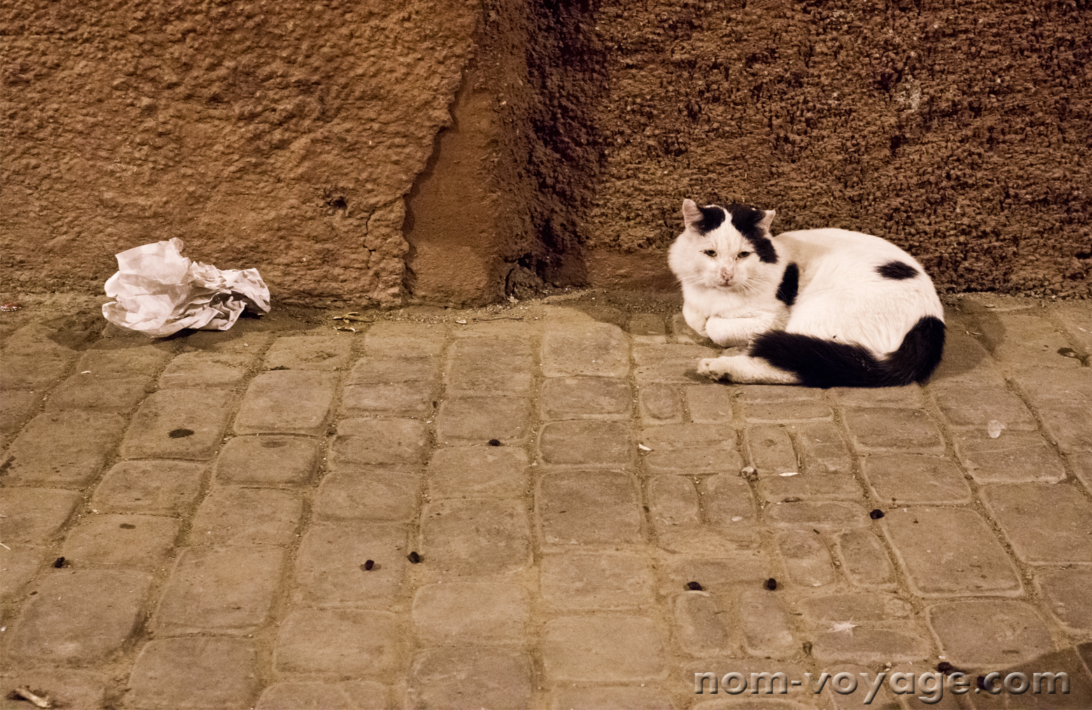 This guy was just hanging out in an alley in the Medina of Marrakech. He really liked cat treats.