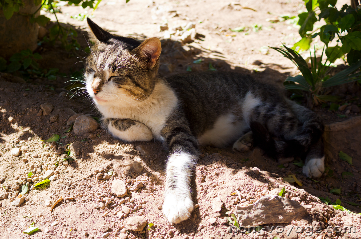 These next few photos are of the cats living on the grounds of the Palais de la Bahia in Marrakech. They were extremely friendly and hungry.