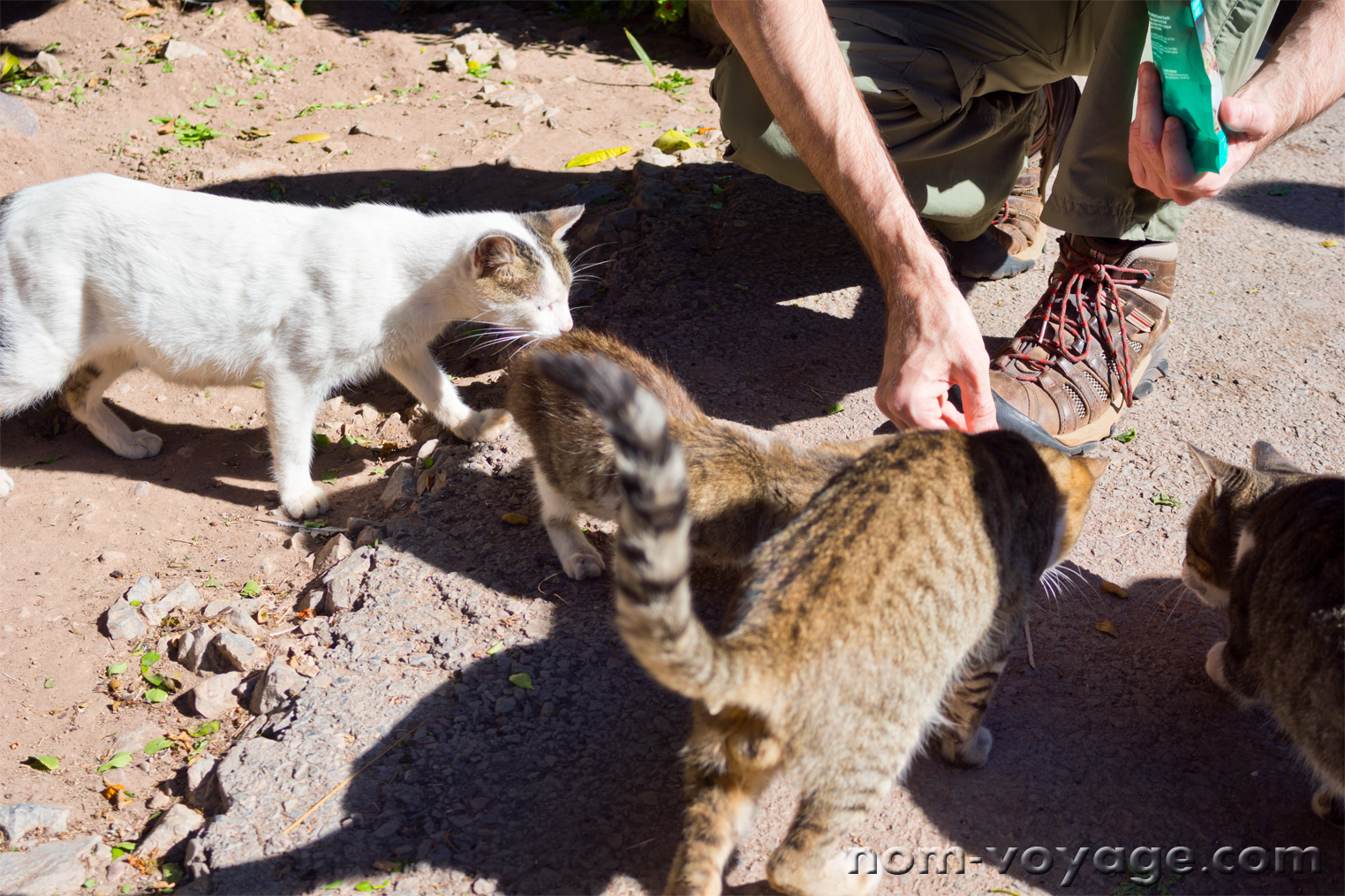 Feeding the cats and kittens of Bahia Palace.