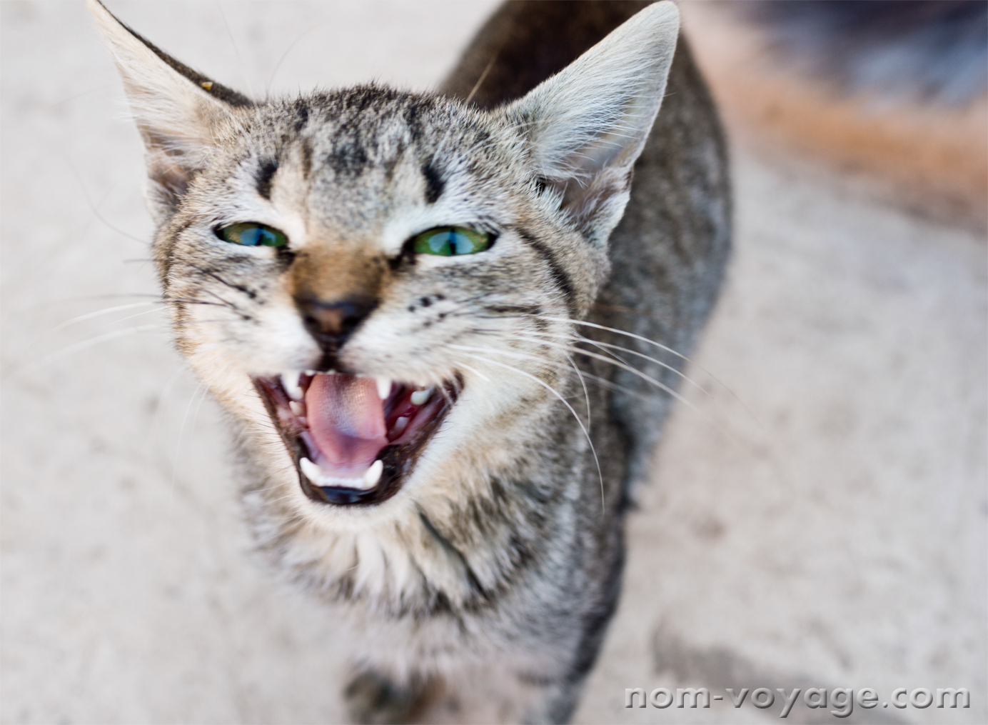 This little guy was very talkative and very hungry. He was one of the cats living in El Badi Palace in Marrakech.